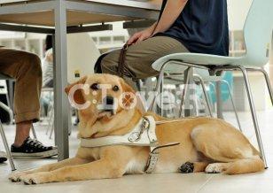 視覚障がい者の側に伏せる盲導犬の様子